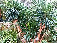 plante cactus