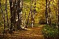131103 Hokkaido University Botanical Gardens Sapporo Hokkaido Japan21bs.jpg