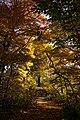 131103 Hokkaido University Botanical Gardens Sapporo Hokkaido Japan22s3.jpg