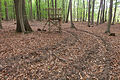 15-05-09-Biosphärenreservat-Schorfheide-Chorin-Totalreservat-Plagefenn-DSCF5526-RalfR.jpg