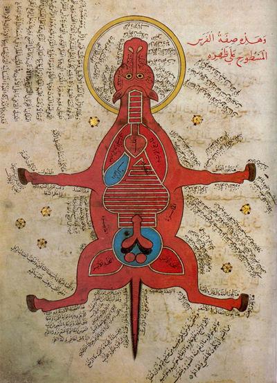 Ló anatómiája egy 15. századi egyiptomi iraton