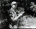1949. Walter J. Buckhorn examines a spruce budworm infested fir. Mt. Hood area, Oregon. (33460382615).jpg