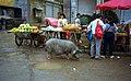 1996 -258-7 Jinghong vicinity (5069112624).jpg