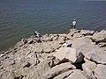 2011年8月14日阿苇滩水库白石头水位只有1.5米深 余华峰 - panoramio.jpg