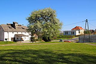 Pietrowice, Opole Voivodeship Place in Opole, Poland