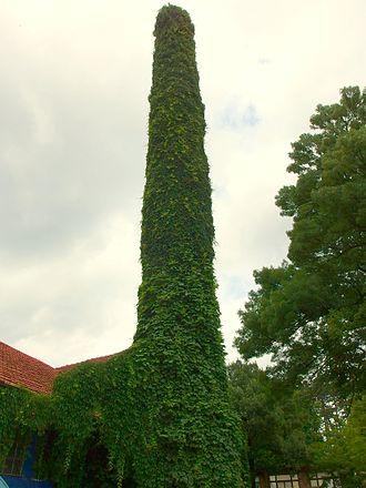 Veliko Tarnovo - Trees in Veliko Tarnovo