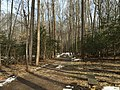 2016-02-08 12 15 06 View north through a grove of American Holly saplings along the Gerry Connolly Cross County Trail between Miller Heights Road and Vale Road in Oakton, Fairfax County, Virginia.jpg