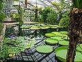 2018-06-18-bonn-meckenheimer-allee-169-botanischer-garten-victoriahaus-09.jpg
