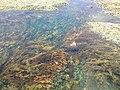250 Ocean Beach Rd, Sorrento VIC 3943, Australia - panoramio (3).jpg