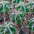 2859 cactus.jpg