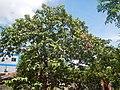 3428Poblacion, Baliuag, Bulacan 37.jpg