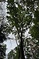 46-101-5024 Бойківська-Академіка Сахарова, залишки дубових лісів.jpg