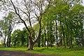 46-215-5007 Piddnistriany Park RB 18.jpg