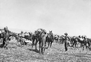 4th Light Horse Regiment (Australia) - The 4th Light Horse in Egypt, after the war in 1919.