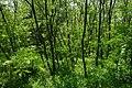 71-203-5012 Chuikhsky SAM 0157.jpg