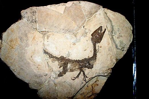 relatieve dating fossielen activiteit
