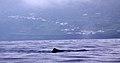 Açores 2010-07-21 (5117027504).jpg