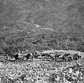 A British Army mule train transports supplies in the Italian mountains, 21 November 1943. NA8984.jpg