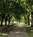 A Tree Avenue in Pickering Park - geograph.org.uk - 865771.jpg