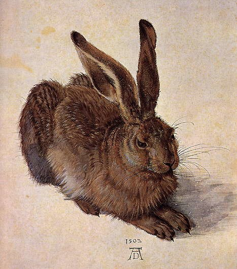 A Young Hare, Albrect Durer
