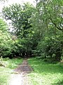 A more open part of the track by Thunderdell Wood, Ashridge - geograph.org.uk - 1378672.jpg
