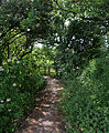 A path and kissing gate at Woodland Trust wood Theydon Bois Essex England.JPG