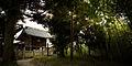 A peaceful forest Shinto temple. Honshu Island. Japan.jpg