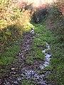 A very damp footpath - geograph.org.uk - 476265.jpg