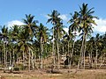 A village in a palm forest. Kilifi District - panoramio.jpg