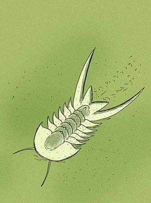 Aaveqaspis - Image: Aaveqaspis inesoni