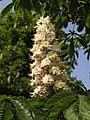 Ab plant 1827.jpg