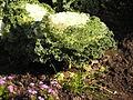 Ab plant 2226.jpg