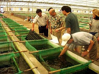 Aquaculture - Abalone farm