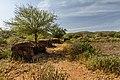 Abandonned Masai Village (7234210506).jpg