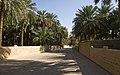 Al Ain Oasis, Al Mutawaa - Abu Dhabi - United Arab Emirates - panoramio.jpg
