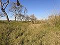 Albardón del asentamiento - panoramio.jpg
