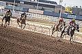 Alberta Breeders' Fall Classic 2014 - Horse Racing (15281633746).jpg