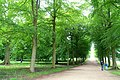 Allee, looking towards Blanche's vase - Chatsworth House - Derbyshire, England - DSC03584.jpg