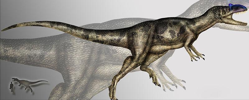 File:Allosaurus fragilis 3.jpg