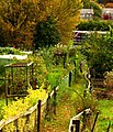 Allotment path - geograph.org.uk - 1004326.jpg