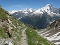 Alpine Ibex (Bouquetin) @ Path from L'Index to Col de la Gliere @ Hike to Lacs des Chéserys, Lac Blanc, Lac Cornu & Lacs Noirs @ Chamonix (15174064088).jpg