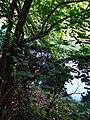 Alto Adige Suedtirol Biotopo Rio dei Gamberi Krebsbach photo by Giovanni Ussi - 20.jpg