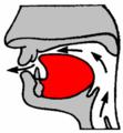 Alveolar2.png