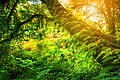 Ang Ka Nature Trail 01.jpg