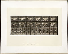 Animal locomotion. Plate 678 (Boston Public Library).jpg