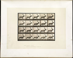 Animal locomotion. Plate 692 (Boston Public Library).jpg