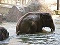 Antwerp Zoo (12211122164).jpg