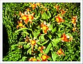 April Tulpe Freiburg Botanischer Garten - Master Botany Photography 2013 - panoramio (3).jpg