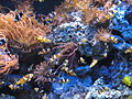 Aquatopia - Annemoonvisjes.jpg