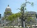 Arbol del Capitolio - panoramio.jpg